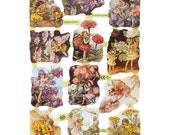 England Paper Scraps Lithograph Die Cut Flower Fairies By Cicely Mary Barker  1888