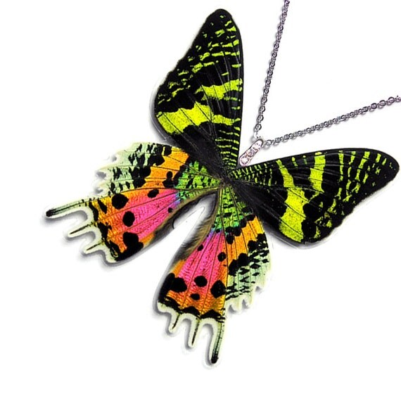 Real Butterfly Wing Necklace / Pendant (WHOLE Urania Ripheus Sunset Moth - W004)