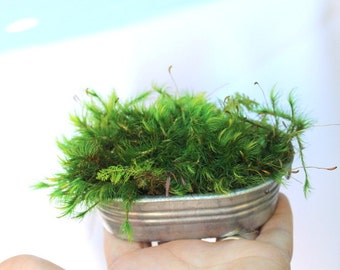 Galvanized tub with preserved mood and feather moss-NO water needed!-Miniature scale gardening-green moss garden