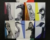 Bird Magnet Set Color Spectrum Set of 10