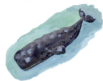 Sperm Whale illustration, original watercolor and ink