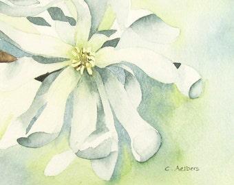 White Star Magnolia Art - Original Watercolor Painting