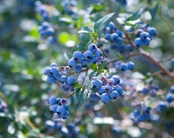 Handmade Organic  Preserves,Farm Grown Organic Blueberry Jalapeno Jam
