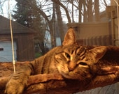 Faux Fur - Curious Cats Window Perch