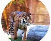 Kids Decor, Modern Wall Decor, Minimal, Symmetry, Decal, Sumatran Tiger Conservation, Orange, Black, Stripe - Prowl
