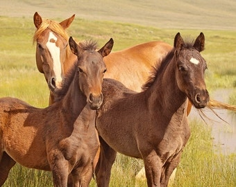 Baby Animal Photograph, Horse Photography, Color Horse Art