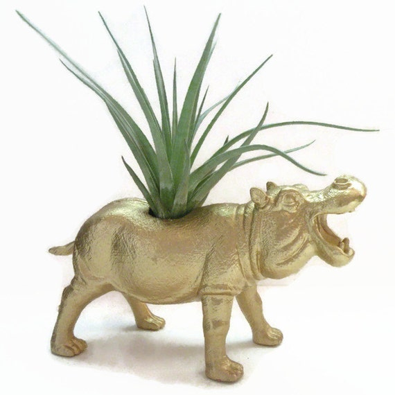 Bright gold hippo animal planter. Air plant included. Special gift for Mothers Day.