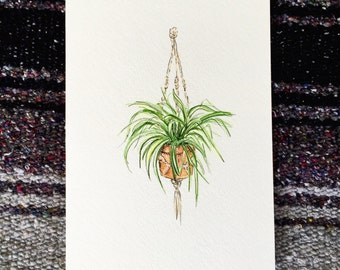 Original watercolor Hanging Spider Plant