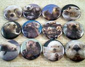 """Sea Otter Magnets, Sea Otter Pins, Gift Set, Nature Lovers Gift,  Western Sea Otters, 1"""" Flat, Hollow Back, Cabochons"""