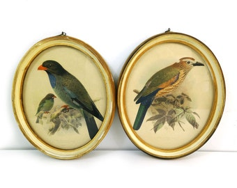 J.G. Keulemans ornithological offset lithograph prints framed under glass, Bird Illustrations