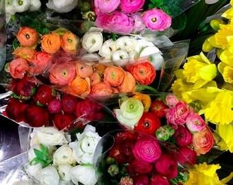 Nature Photography- Fine Art Photography- Flowers- Fine Art Print-Ranunculus-Colorful- Spring