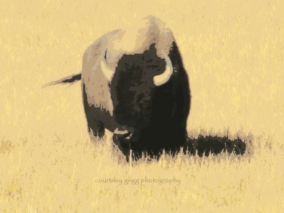 """Abstract Bison (8"""" x 10"""" photograph) -buffalo, Yellowstone National Park, Wyoming, Montana, nature, landscape, field, wild west"""