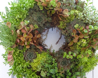 Succulent Wreath   Living Wreath  Christmas Gift  Patio Wreath  Door Wreath  Natural Wreath