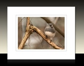 Perched Junco Small Bird Matted Print, Avian theme art, Earth tones, Backyard Birds, Ready for framing or framed
