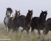 Medicine Hat and his Family - Fine Art Wild Horse Photograph - Wild Horse - Medicine Hat