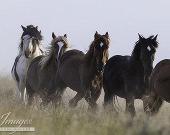 Medicine Hat and his Family - Fine Art Wild Horse Photograph - Wild Horse - Medicine Hat - Fine Art Print