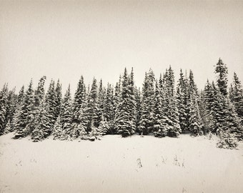 Woodland Photography Print 12x18 Fine art Banff Canada Forest Pine Beige Trees Rustic Snow Winter Landscape Photography Print.