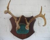 Vintage Deer Antlers - 8 Point - Mounted - Taxidermy