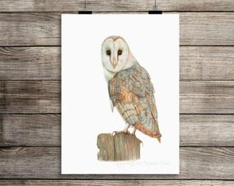 Barn Owl Watercolor Print, Owl Print, Instant Digital Print, Print Download, Digital Print, 8x10 Digital Print, INSTANT DOWNLOAD