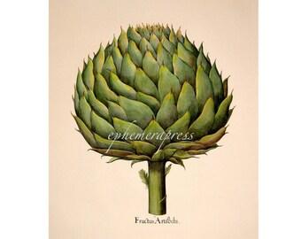 """small ARTICHOKE PRINT - green globe artichoke vegetable print - Jerusalem artichoke - carcofi - 7.5 x  8.125"""""""