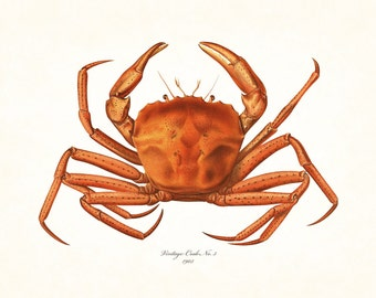 Vintage Crab Print No. 22, Giclee, Art Print, Nautical Art, Beach Decor, Coastal Art, Print, Collage, Natural History Art, Illustration