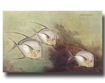 "Vintage Ocean Watercolor Print, 1930s Tropical Fish Art --- ""Moonfish or Opah"" Fish No. 197"