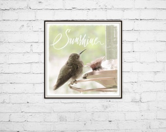 Hummingbird Art Print - Sunshine Quote - Bird Art Print - Bird Feeder - Hummingbird Photography - Square Art - Bird Photo - Nature Art Print