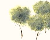 Tree Study Original Watercolor Painting