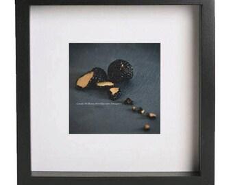 truffles,black truffles,truffle oil,restaurant wall art,culinary imagery, food photography, square print, grey blue tones, luxury food