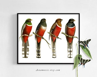 BIRD WATCHERS - digital image download - printable antique bird illustrations retooled for image transfer - totes, pillows, prints, clothes