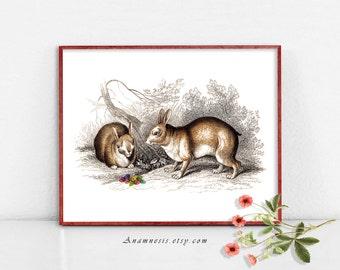 EASTER EGG RABBITS - digital download - printable antique bunny illustration retooled by Anamnesis - image transfer - totes, pillows, prints