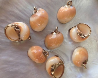 Nerita Shells in Natural Mustard Color (8 pieces)