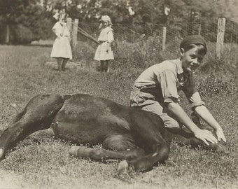 Sleeping Beauty - Antique 1910s Boy and Foal Real Photo Postcard