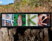 WORDS Inspired by Nature: HIKE with pinecone, evergreen and rustic wood (photography, art, gift, home decor, hiking, outdoor recreation)