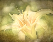 Tiger Lily Photograph, Wall Art, Floral Decor, Petals, Flower Photo, Still Life, Flower Print, Textured Photo, Peach Color, Gifts Under 30