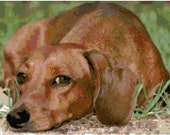 Dachshund Counted Cross Stitch Pattern Chart PDF Download by Stitching Addiction Brown Tan Red