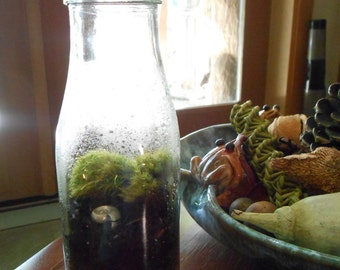 Starbucks Frappuccino Terrarium Upcycled Live Moss