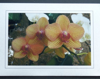 Orchids III Greeting/Notecard