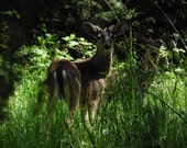 Spike and Doe, Digital Download, buck and doe deer, deer decor, wildlife decor, Fine Art Photography