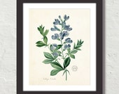 French Blue Antique Botanical Giclee Canvas Print, Wall Art, Botanical Print, Poster, Antique Botanical, Sizes Starting at USD 50.00+