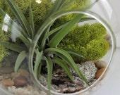 Geode and Pyrite Air Plant Terrarium Kit