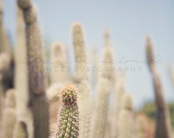 Cactus Field - Photographic Print -  cacti, native, southwest, american, arizona, green, blue, wild, wanderlust, travel, cacti