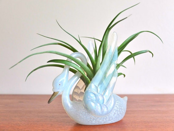 Plastic swan dish planter display 1960s - Plastic swan planter ...
