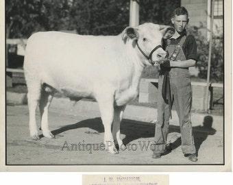 Blue ribbon winner boy dairy farmer with bull calf vintage art photo