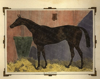 Antique Original Hand colored Engraving of Horse -  Gladiator Horse