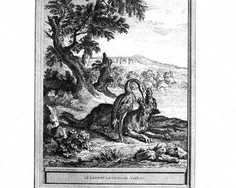 Original Antique Engraving   - Bird and Animal