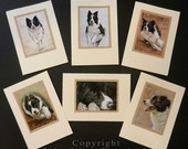 Pack of 6 assorted Border Collie Dog Portraits Hand Made Greetings Cards. From Original Paintings by JOHN SILVER. GCBCmulti02