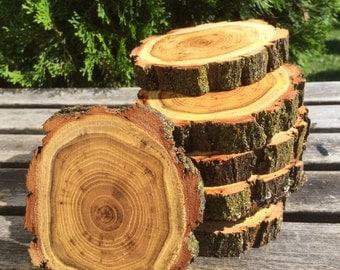 10 Black Locust Log (6-7in) Slice Hard Wood coasters disk center piece DIY Wedding party shower wooden rustic natural glam