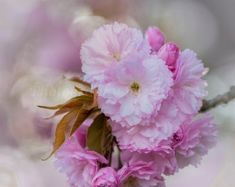 Floral Photography, Flower Photography, Pink Flower, Garden Photography, Home Decor, Wall Art, Bedroom Art, Spring Flower Photography