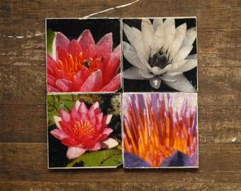 Water Lilies Tile Coasters - Set of 4 // Flowers // Canada // Photography // Lillies // Springtime // Water lilies // botanical